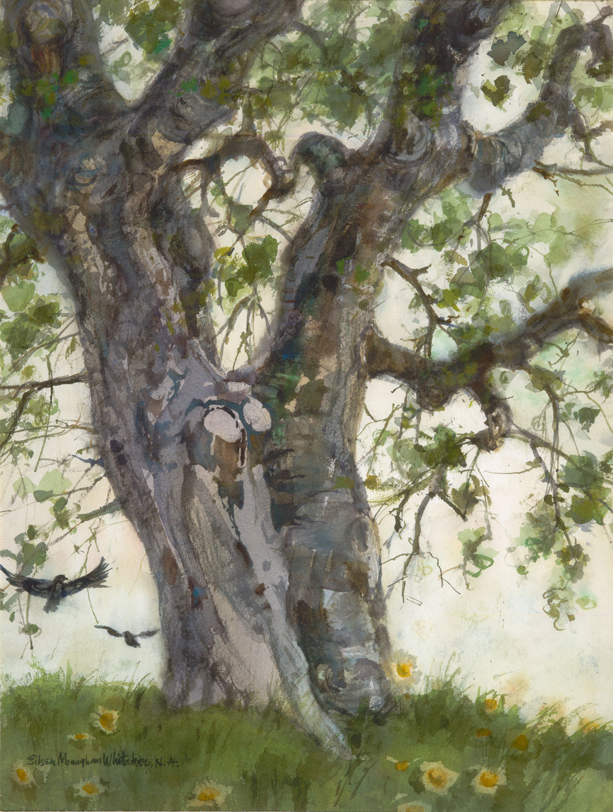 """Eucalyptus Trees © Eileen Monaghan Whitaker 14x22 (date unknown) Watercolor"