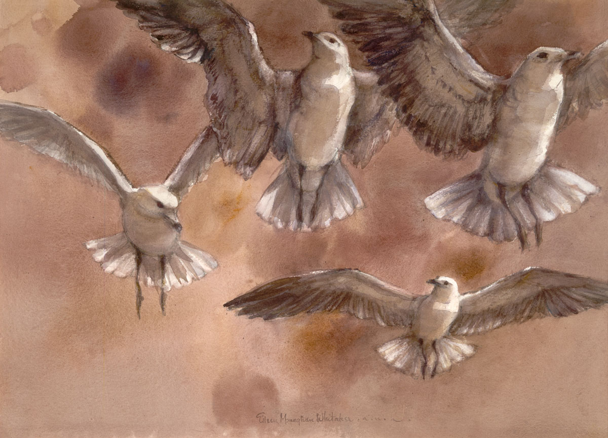 """Gulls in Flight"" © Eileen Monaghan Whitaker 22x30 inches Watercolor"