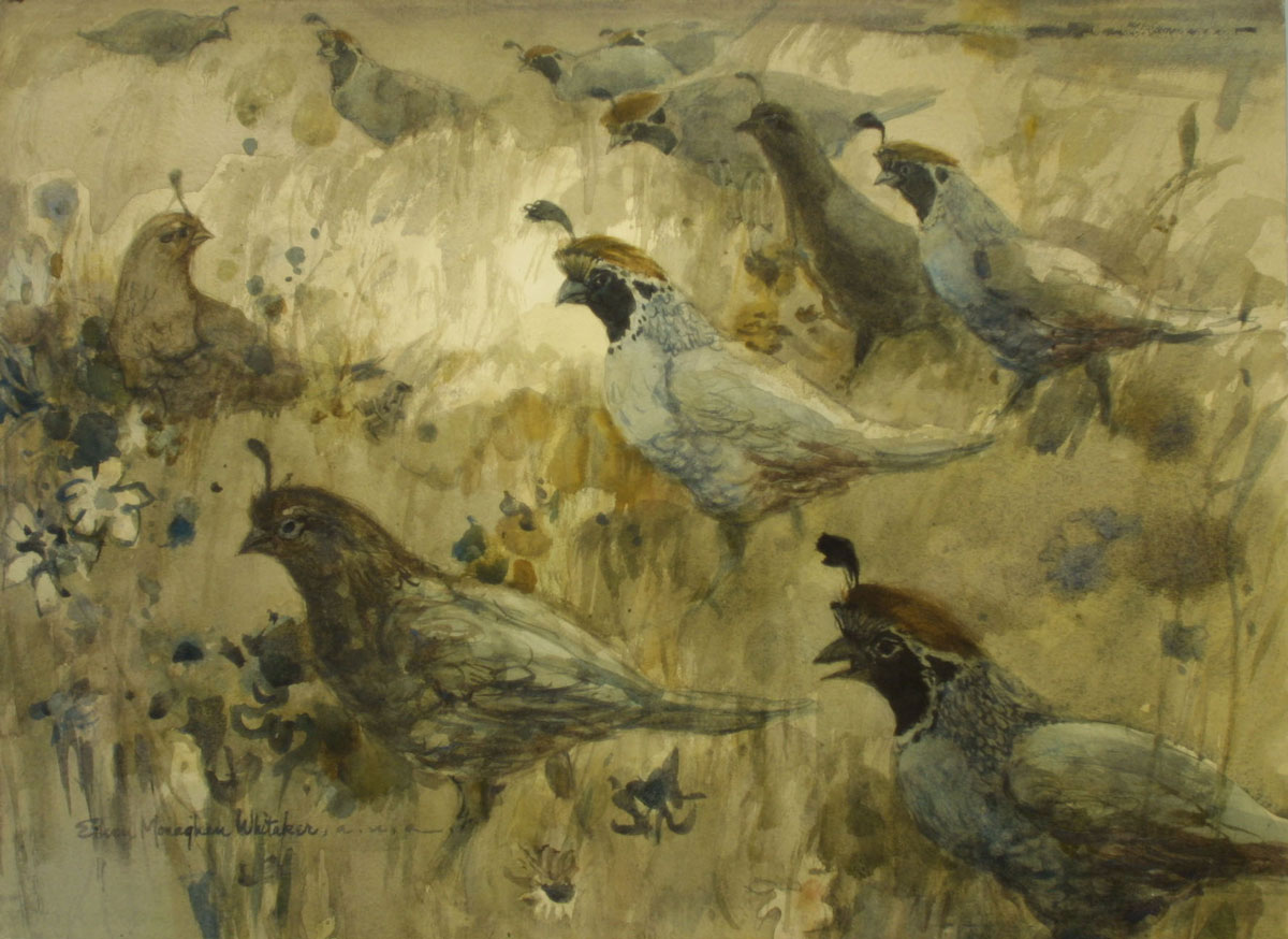 """Quail Covey"" 1972 © Eileen Monaghan Whitaker 22x30 inches Watercolor"