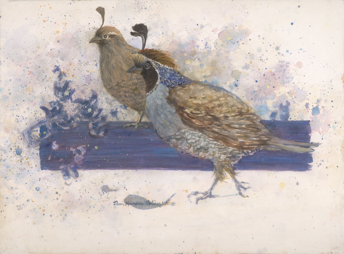 """Top Knot Quails"" 1996 © Eileen Monaghan N.A. Whitaker 22x29.5 inches Watercolor"