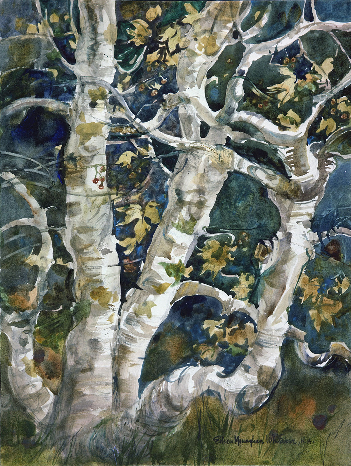 """""""Untitled - Tree"""" © Eileen Monaghan Whitaker (size and date unknown) Watercolor"""
