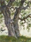 """Eucalyptus Trees © Eileen Monaghan Whitaker 14x22 (date unknown) Watercolor"