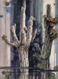 """""""Saguaro Design"""" 1975 © Eileen Monaghan Whitaker 22x16 inches Watercolor"""