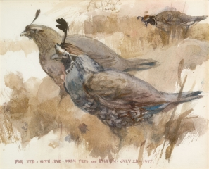 """Top Knot Quail"" 1977 © Eileen Monaghan Whitaker 23x30 inches Watercolor"