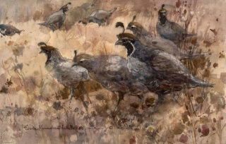 """California Quail"" 1969 © Eileen Monaghan Whitaker 14x22 inches Watercolor"