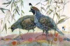 """Two  Quail"" 1982 © Eileen Monaghan Whitaker N.A.  14x22 inches Watercolor"