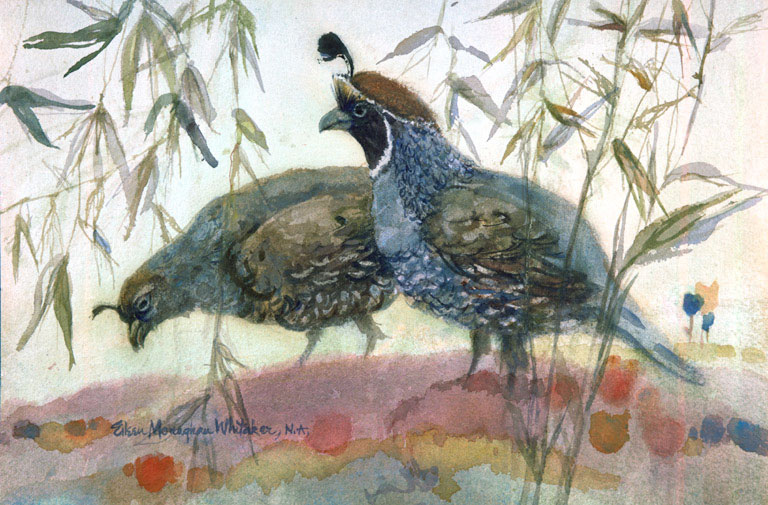 """Two  Quail"" 1982 © Eileen Monaghan Whitaker 14x22 inches Watercolor"
