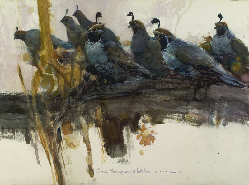 """Quail Perch"" 1970 © Eileen Monaghan Whitaker (size unknown) Watercolor"