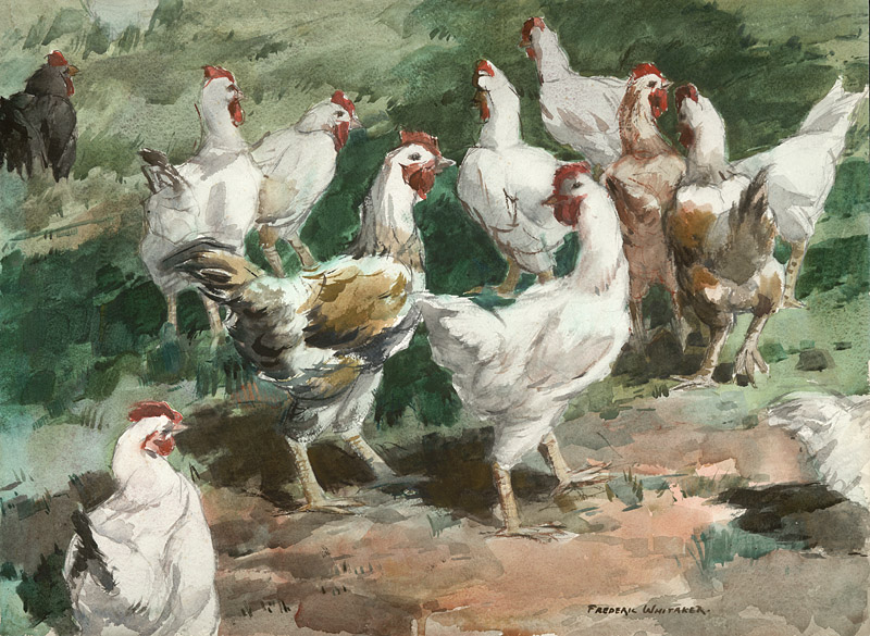 """Gallinaceous Gathering"" 1963 © Frederic Whitaker 22x30 inches Watercolor"