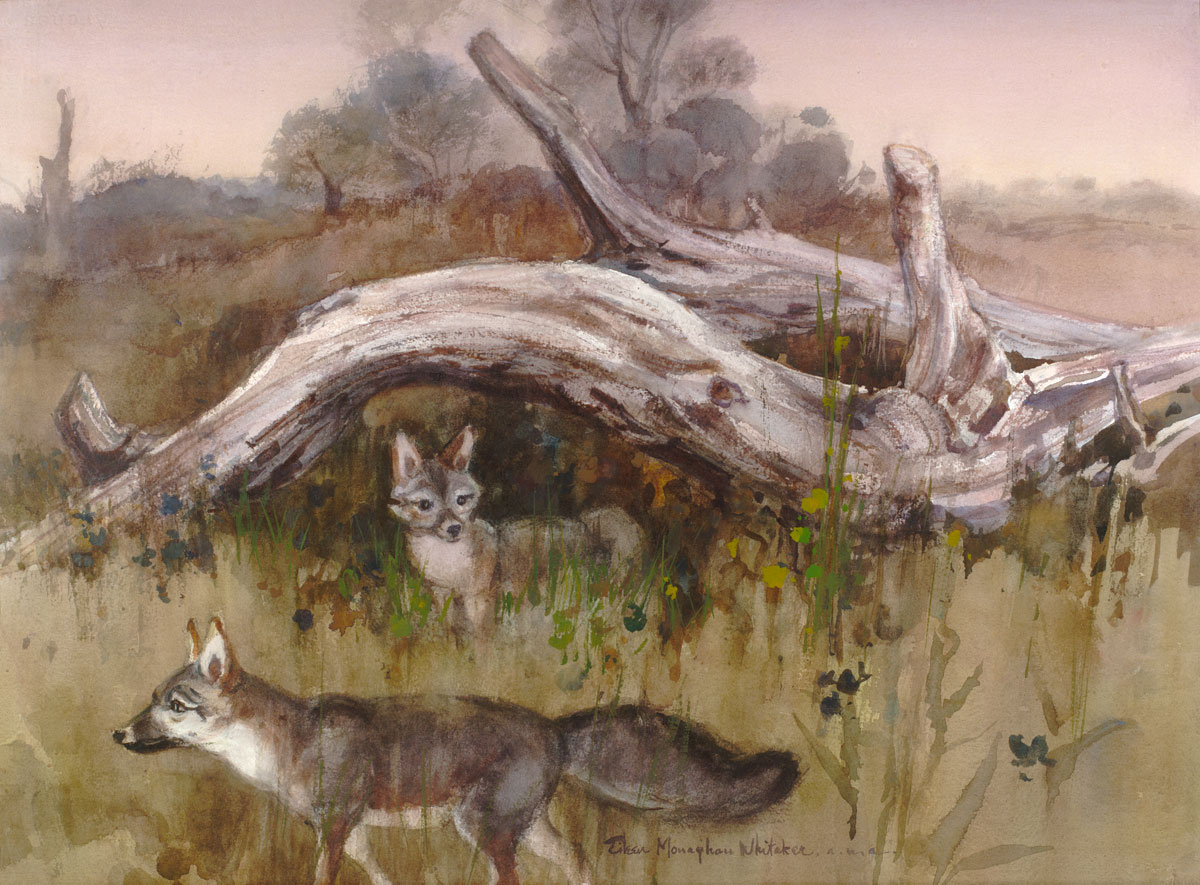 """Where the Foxes Live"" © Eileen Monaghan Whitaker (size and date unknown) Watercolor"