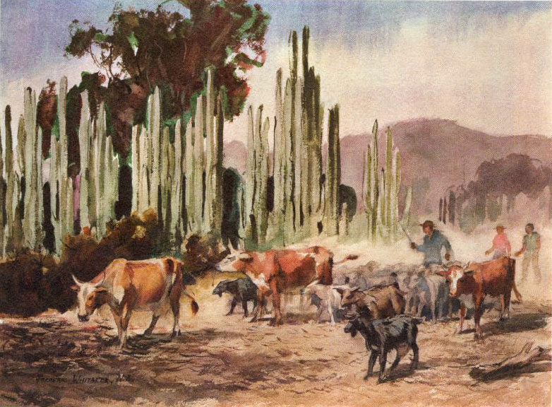 """Dusty Trail"" 1966 © Frederic Whitaker 22x30 inches Watercolor"