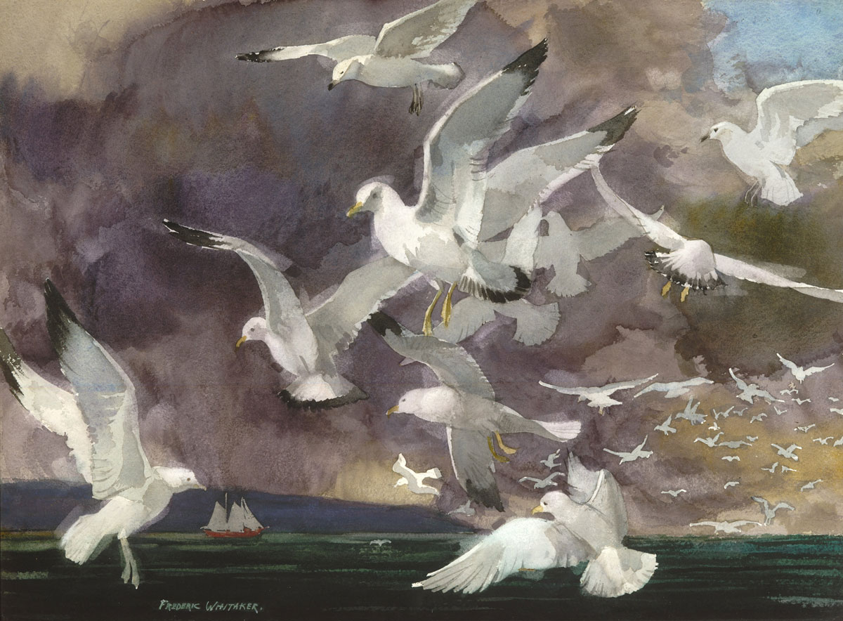 """Seagulls Off La Jolla"" © Frederic Whitaker 22x30 inches (date unknown)"