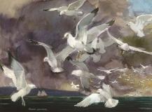 """Seagulls Off La Jolla"" © Frederic Whitaker 22x30 inches (date unknown)"