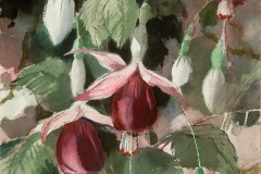 """Fuchsias #1"" 1965 © Frederic Whitaker 22x16 inches Watercolor"