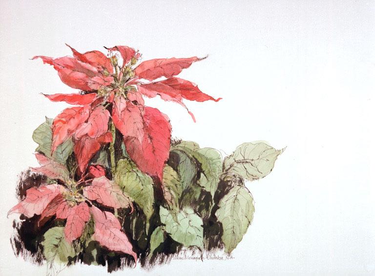 """Ecke Pointsettia"" © Eileen Monaghan Whitaker N.A. 15.5x13 inches Watercolor"