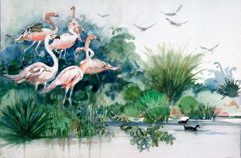 """Flamingos, Sea World, S.D. 1983 © Eileen Monaghan Whitaker N.A. 14x22 inches Watercolor"