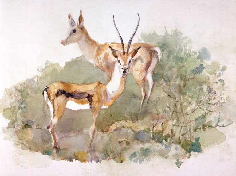 """Springbok Wild Animal Park"" 1986 © Eileen Monaghan Whitaker N.A. 16x22 Watercolor"