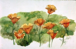 """California Poppies"" 1984 © Eileen Monaghan Whitaker 14x22 inches Watercolor"