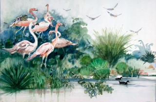 """Flamingos, Sea World, S.D. 1983 © Eileen Monaghan Whitaker N.A. 14x22 inches Watercolor"