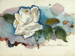 """White Rose #3"" 1980 © Eileen Monaghan Whitaker  N.A.  11x15 inches Watercolor"